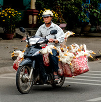 Taking Geese to Market - Vietnam